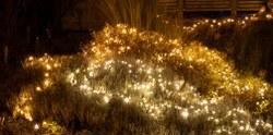 Illumination 56